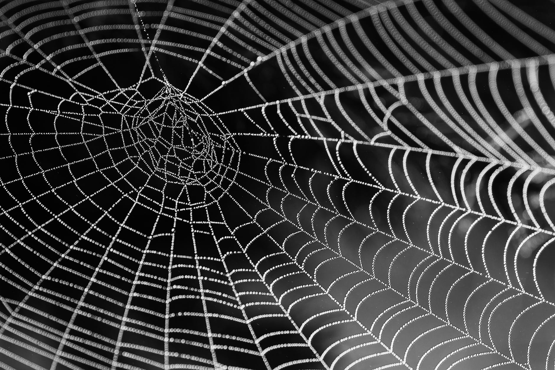 spider web analogy for internet